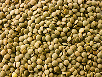 Organic Green Lentils Beans - Stock Photos