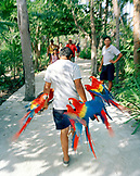MEXICO, Maya Riviera, man carrying Macaws at Xcaret Eco Park