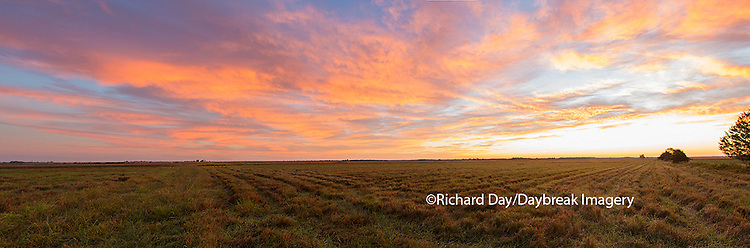 63893-02513 Sunrise at Prairie Ridge State Natural Area, Marion County, IL