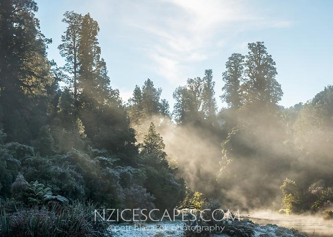 Native forest at Okarito River on misty frosty morning, Westland Tai Poutini National Park, West Coast, UNESCO World Heritage Area, New Zealand, NZ