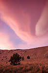 Pink sunset clouds in the Eastern Sierra, Green Creek Area, Toiyabe National Forest, California