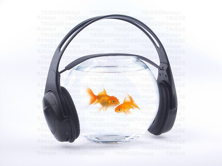 A goldfish bowl with headphones