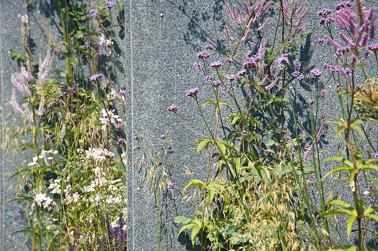 The World Vision Garden, Hampton Court Flower Show 2011. Plants include Verbena bonariensis, Veronicastrum virginicum 'Fascination', Deschampsia cespitosa 'Goldschleier, and Gaura lindheimeri 'Whirling Butterflies'