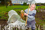 Cllr Michael Gleeson digging some vegetables from his garden on Sunday