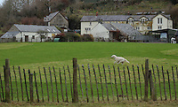 FAO JANET TOMLINSON, DAILY MAIL PICTURE DESK<br />Pictured: Exterior view of The Dog House Wednesday 23 November 2016<br />Re: The Dog House in the village of Talog, Carmarthenshire, Wales, UK