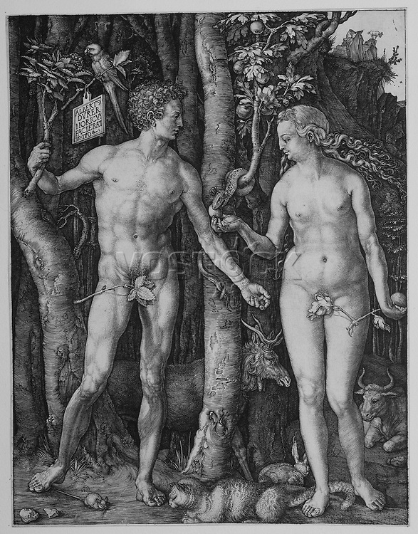 Adam and Eve by Albrecht Dürer, 1504