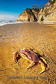 Tom Mackie, LANDSCAPES, LANDSCHAFTEN, PAISAJES, photos,+America, American, Americana, Dungeness crab, Hug Point State Recreation Site, North America, Oregon, Pacific Northwest, Paci+fic Ocean, Tom Mackie, USA, beach, beaches, coast, coastal, coastline, coastlines, nationalpark, natural, nature, no people,+ocean, portrait, sand, sea, tide pool, tide-pool, tidepool, upright, vertical,America, American, Americana, Dungeness crab, H+ug Point State Recreation Site, North America, Oregon, Pacific Northwest, Pacific Ocean, Tom Mackie, USA, beach, beaches, coa+,GBTM170431-1,#l#, EVERYDAY