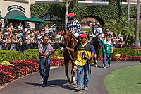 DEL MAR, CA  AUGUST 4: #4 Tap the Wire, ridden by Drayden Van Dyke, in the paddock before the Graduation Stakes  August 4, 2018 at Del Mar Thoroughbred Club in Del Mar, CA. (Photo by Casey Phillips/Eclipse Sportswire/ Getty Images)