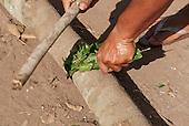 Xingu Indigenous Park, Mato Grosso, Brazil. Aldeia Matipu. Preparing medicinal herbs.