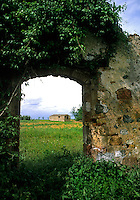 Old stone buildings and vineyards in romantic Tuscany in Siena Ital