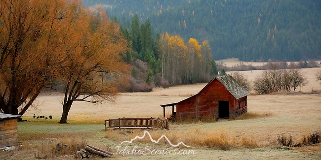 Idaho, North,Coeur d'Alene. A rustic red outbuilding and small footbridge in a frost covered pasture in autumn with wild turkeys. HDR