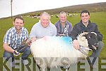 A Quartet of South Kerry Champions will compete for All Ireland glory at the Sheep Shearing Championships being held in Millstreet, Co Cork on the 25th & 26 May, pictured here l-r; Peter Hussey-Caherdaniel(2010 All Ireland Champion), Patrick Moriarty-Kells(2003 All Ireland Champion), Patrick Moran-Maughernane(1997 & 2000 All Ireland Champion) & Sean O'Sullivan-Dromid(2006, 2010 & 2011 All Ireland Champion).  Patrick Moran also holds the British Isles hand shearing record with 206 sheep in 9 hours.
