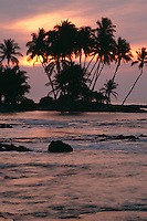 Coconut palms at sunset<br /> Pauoa Bay<br /> South Kohala Coast<br /> Island of Hawaii,  Hawaii