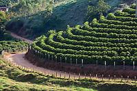 Pedra Bonita_MG, Brasil...Plantacao de cafe em Pedra Bonita, Minas Gerais...The coffee agriculture in Pedra Bonita, Minas Gerais...Foto: LEO DRUMOND / NITRO