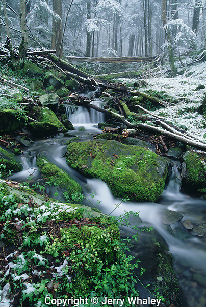 Late Snow, Early Spring, Great Smoky Mountains NP, TN
