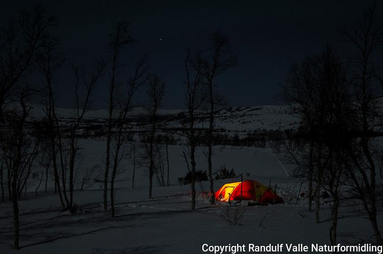 Teltleir i bjørkeskog ---- Tent in birch forrest