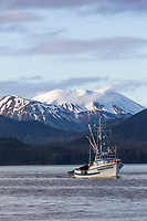 Sitka sac roe fishing