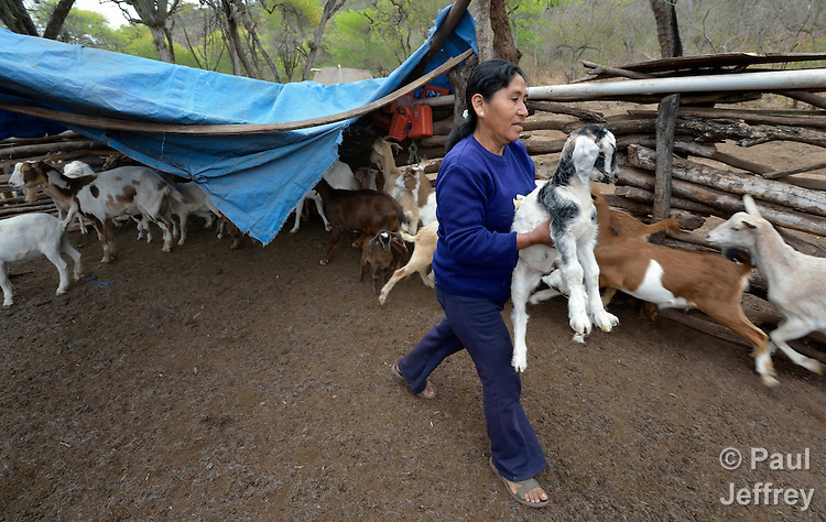 Primitiva Torres Mendoza cares for her goats in the Guarani indigenous village of Kapiguasuti, Bolivia.