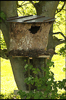 BNPS.co.uk (01202 558833)<br /> Pic: RobertFuller/BNPS<br /> <br /> ***Please use full byline***<br /> <br /> T-wet T-hru<br /> <br /> Roberts elaborate nesting box.<br /> <br /> These tiddly tawny owl chicks took a soaking when they were caught out in one of the torrential downpours drenching Britain.<br /> <br /> The four usually-fluffy chicks ended up sodden and bedraggled and in need of rescue after boldly attempting to fly the nest during a rainstorm.<br /> <br /> The 10-inch chicks ended up on the ground and, with their downy feathers soaked with water, were unable to climb back up the tree to their perch.<br /> <br /> They were rescued by wildlife photographer Robert Fuller, who scooped them up and put them in a box to dry out before returning them to their nest.<br /> <br /> Robert set up a nesting box for the owls in a tree near his house in Thixendale, North Yorks - and since the chicks have hatched he has rescued them twice.