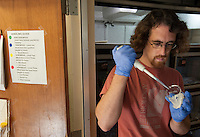 130729-N-DR144-462 - Graduate Student Eric Gren collects venom after it was extracted from a Southern Pacific Rattlesnake at Loma Linda University's Center for Biodiversity and Conservation. Gren, working under Professor of Biology William K. Hayes, is studying venom variability in several species of rattlesnake native to the western United States. Their research suggests the Southern Pacific Rattlesnake may have the widest variability of venom of any rattlesnake and that in parts of its range, its venom may rival the more well-known Mohave Rattlesnake in toxicity.