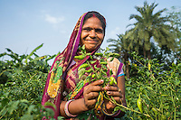Vegetable farmer Kajal Devi, 20, a member of a Farmer's Producer Group, tends to her chilli plants in her farm in Machahi village, Muzaffarpur, Bihar, India on October 26th, 2016. Non-profit organisation Technoserve works with women vegetable farmers in Muzaffarpur, providing technical support in forward linkage, streamlining their business models and linking them directly to an international market through Electronic Trading Platforms. Photograph by Suzanne Lee for Technoserve