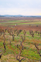 Minervois. Languedoc. Vines trained in Gobelet pruning. Vineyards in winter with mountain range on the horizon. France. Europe. Mountains in the background.