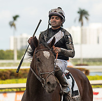 HALLANDALE BEACH, FL - March 31: Coach Rocks, #2, heads to the winners circle with jockey Luis Saez in the irons for trainer Dale Romans for the Gulfstream Park Oaks at Gulfstream Park on March 31, 2018 in Hallandale Beach, FL. (Photo by Carson Dennis/Eclipse Sportswire/Getty Images.)