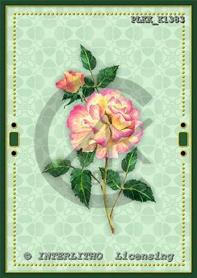 Kris, FLOWERS, paintings, PLKKK1383,#f#