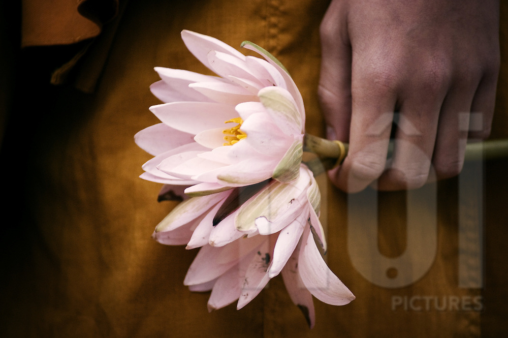 Close Up Of A Monks Hand Holding Two Lotus Flowers Images Of