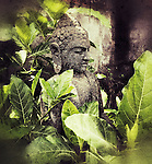 Buddha a peaceful moment embraced by mother nature his photo was taken during one of my photo walk about in Sanur Bali Indonesia November 4, 2016. ©Fitzroy Barrett