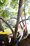 FRENCH POLYNESIA, Tahiti. Surfboards in tree at Papenoo Beach.