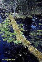 BS01-004b  Woodland bog