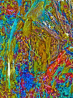 """MONTANA MOOSE""<br />
