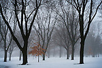 "16 January 2010 -- Fog forms over snow in the evening at Memorial Park in Omaha, Neb. on January 16. ""Advection fog"" is formed when warm air passes over a cool surface.  PHOTO/Daniel Johnson (Copyright 2010 Daniel Johnson)"