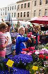 Flower stall at the Salamanca Market. Hobart, Tasmania, AUSTRALIA