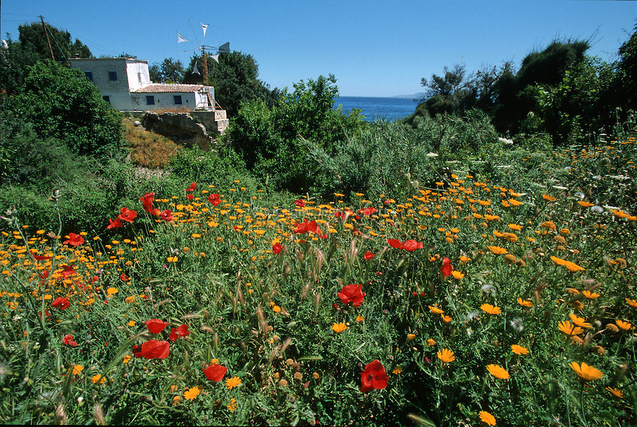 flowers and house in Akamas peninsula