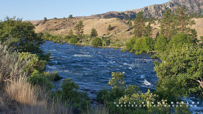 Riverside vegetation along the Deschutes River, Oregon.