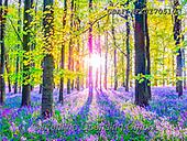 Assaf, LANDSCAPES, LANDSCHAFTEN, PAISAJES, photos,+Bluebell, Bluebells, Forest, Nature, Outdoors, Tree, Trees, Wood, Woodland,Bluebell, Bluebells, Forest, Nature, Outdoors, Tre+e, Trees, Wood, Woodland+++,GBAFAF20170510,#l#, EVERYDAY
