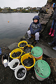 pre-collected stones await skimmers - at the World Stone Skimming Championships which attracted over 300 entries from all round the world - Easdale is reached by a small open ferry-boat from the Isle of Seil - south of Oban - picture by Donald MacLeod - 25.9.11 - clanmacleod@btinternet.com 07702 319 738 donald-macleod.com