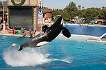 orca jumping at Sea World