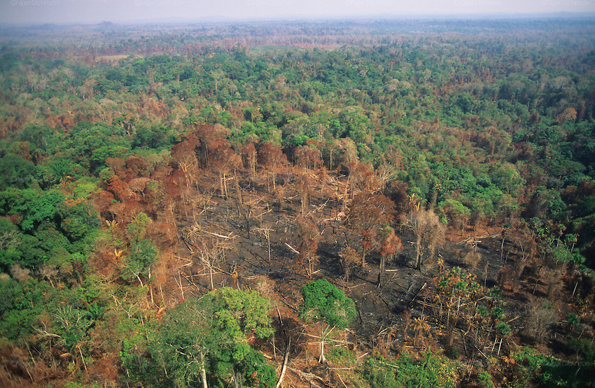 deforestation and malaria The fact that deforestation, one of the fastest global drivers of landscape change, may affect the prevalence of a disease like malaria raises larger issues, says patz i feel conservation policy is one and the same with public health policy, he says.