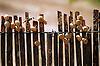 Snail shells on reeds<br /> <br /> Conchas de caracoles en cañas<br /> <br /> Schneckenhäuser an Schilfrohren<br /> <br /> 2107 x 1400 px<br /> Original: 35 mm