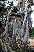 A stranfler fig tree grows on the third eastern gopura of Ta Som temple, in Ankgor, Cambodia, on October 7, 2009. Ta Som is a small temple built at the end of the 12th century for King Jayavarman VII. Angkor used to be the seat of the Khmer empire, which flourished from approximately the ninth century to the thirteenth century. The ruins of Angkor temples are a UNESCO World Heritage Site. Photo by Lucas Schifres/Pictobank
