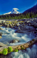 M00084.tif   Moss covered log. White River and Mount Hood with lenticular cloud. Oregon