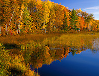 Vilas County, WI<br /> Fall colored forest reflects on West Plum Lake
