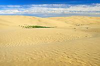 Sand dunes <br /> Great Sand Hills<br /> Saskatchewan<br /> Canada