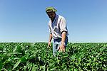 URUGUAY field with Monsanto GMO (gene modified organism) soya bean, soja beans are exported to EU and China for animal fodder for pig, chicken etc.  / URUGUAY Estancia La Magdalena bei Salto, Grossflaechiger Anbau von Monsanto Gensoja fuer Futtermittel Export nach China und in die EU zur Mast von Schweinen Huehnern usw, Verwendung des Pflanzenschutzmittel Roundup von Monsanto