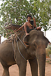 Boy mahout on Asian elephant. Koh Lanta, Thailand