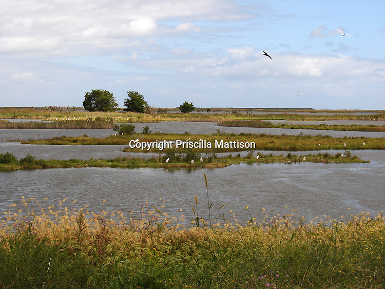 Galloway Township, New Jersey -  September 19, 2008:  Birds soar in the Edwin B. Forsythe National Wildlife Refuge.