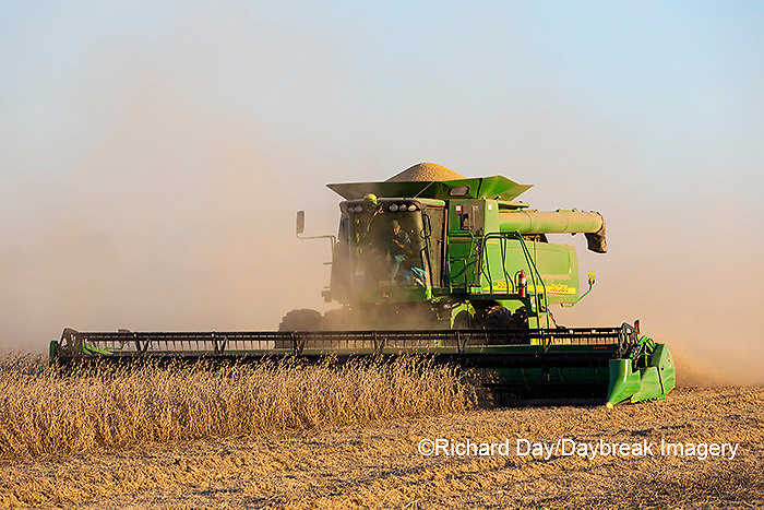 63801-13202 Harvesting soybeans in fall  Marion Co. IL